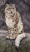 David Stribbling - Snow Leopard Sentry