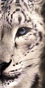 Black Leopard Framed Prints - Snow Leopard Framed Print by Sheena Pike