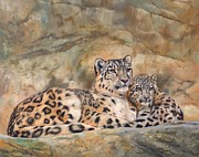 Leopards Paintings - Snow Leopards by David Stribbling