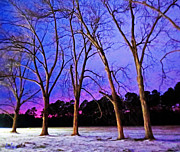 Lisa Jones - Snow Lined Trees in a...