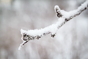 Robert Hellstrom - Snow Macro