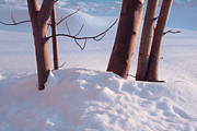 Blue Painting Originals - Snow Maples by Merv Scoble