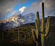 Jon Van Gilder Framed Prints - Snow On The Catalina Mountains Framed Print by Jon Van Gilder
