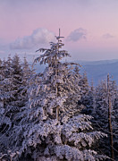 Landscape Photography Photos - Snow on the Pines by Bruce Siulinski