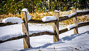 Split Rail Fence Posters - Snow On the Split Rail Fence Poster by M Dale