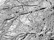 Lots Of Snow Prints - Snow on the Tree Print by JW Hanley