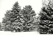 Jon Burch Photography - Snow on the Trees