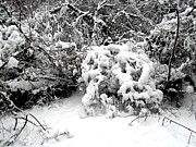 Snow Scene Metal Prints - Snow Scene 1 Metal Print by Patrick J Murphy