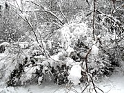 Snow Scene Metal Prints - Snow Scene 4 Metal Print by Patrick J Murphy