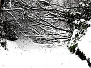 Snow Scene Metal Prints - Snow Scene 5 Metal Print by Patrick J Murphy