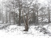 Snow Scene Metal Prints - Snow Scene 7 Metal Print by Patrick J Murphy