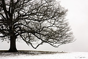 Matthew Turlington - Snow Tree 2010