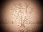 Winter Storm Art - Snow Tree by Michael L Kimble