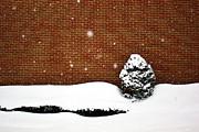 Snow Wall Print by Tim Buisman