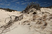 Florida Panhandle Prints - Snow White Dunes Print by Adam Jewell
