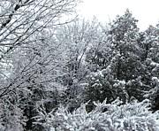 Gail Matthews - Snow Whitewashes the trees