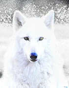Endangered Wolves Prints - Snow Wolf Print by Nick Gustafson