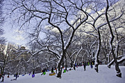 Snowboarders In Central Park Print by Madeline Ellis