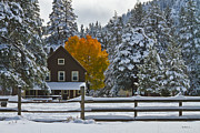 Snowed Trees Art - Snowed In At The Ranch by Mitch Shindelbower