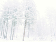 Winter Storm Metal Prints - Snowed In Metal Print by Tara Turner