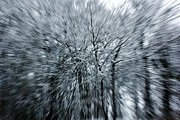 Abstracted Photo Framed Prints - Snowed Trees 3 Framed Print by Xoanxo Cespon