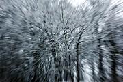 Snowed Trees 3 Print by Xoanxo Cespon
