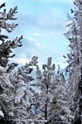 Montana Landscape Prints - Snowfall 2013 Print by Janie Johnson