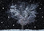 Snowfall At Night Print by Sheila Kay McIntyre