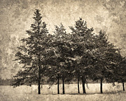 Framed Winter Snow Photograph Posters - Snowfall Poster by Jude Mcconkey