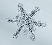 Tom Biegalski Metal Prints - Snowflake 3 Metal Print by Tom Biegalski