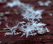 Kathleen Luther - Snowflake Crystals
