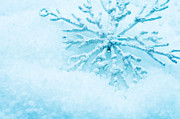Snowflake In Snow Print by Michal Bednarek