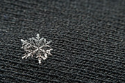 All - Snowflake on Black by Jaci Harmsen