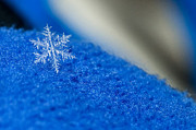 All - Snowflake on Blue by Jaci Harmsen