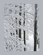 Heavy Weather Prints - Snowing in the Woods Print by Patricia Overmoyer