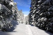 Summit County Colorado Photos - Snowshoe Heaven by Eric Glaser