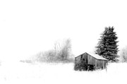 Winter Scenes Prints - Snowy Abandon Print by Emily Stauring