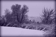 Winter Trees Metal Prints - Snowy Bench in Purple Metal Print by Carol Groenen