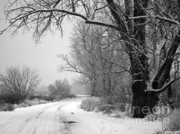 Snowy Roads Photo Framed Prints - Snowy Branch over Country Road - Black and White Framed Print by Carol Groenen
