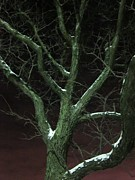 Snowy Night Metal Prints - Snowy Branches Metal Print by Guy Ricketts