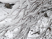 True Vine Gallery-- Donna E Dixon - Snowy Branches