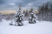 Christmas Holiday Scenery Art - Snowy Dawn by Deborah  Bowie