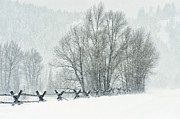 Most Photo Posters - Snowy Day in the Tetons Poster by Sandra Bronstein
