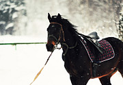 Horse Run Photos - Snowy Day by Jenny Rainbow