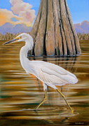Migratory Bird Painting Framed Prints - Snowy Egret and Cypress Tree Framed Print by Phyllis Beiser