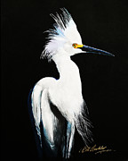 Bill Dunkley - Snowy Egret