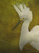 Grace Dillon - Snowy Egret in Breeding...