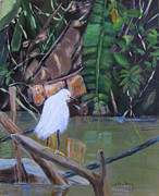 Linda Feinberg - Snowy Egret in Costa Rica