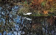 Susan Wiedmann - Snowy Egret Reflecting