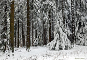 Mahmoud FineArt - Snowy Forest